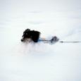 雪の中走ってます