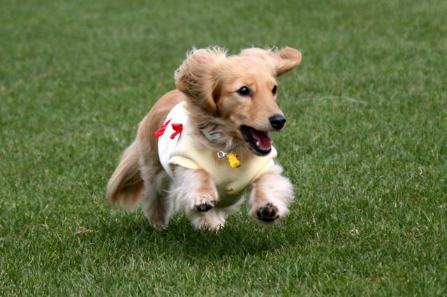 走るの大好き!