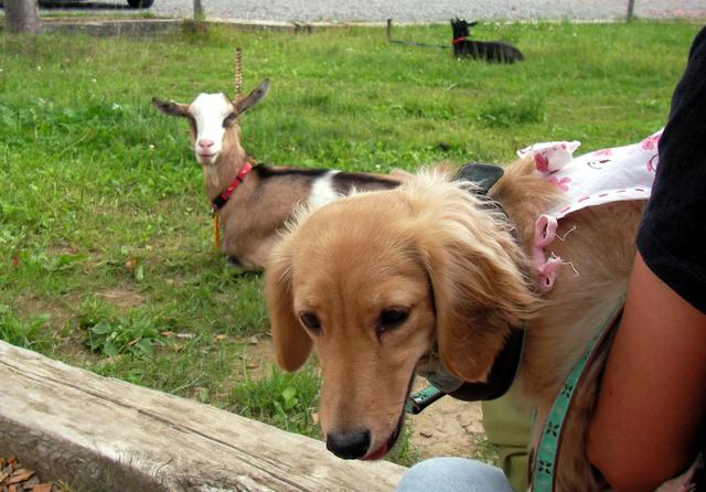 羊 初めて見ました