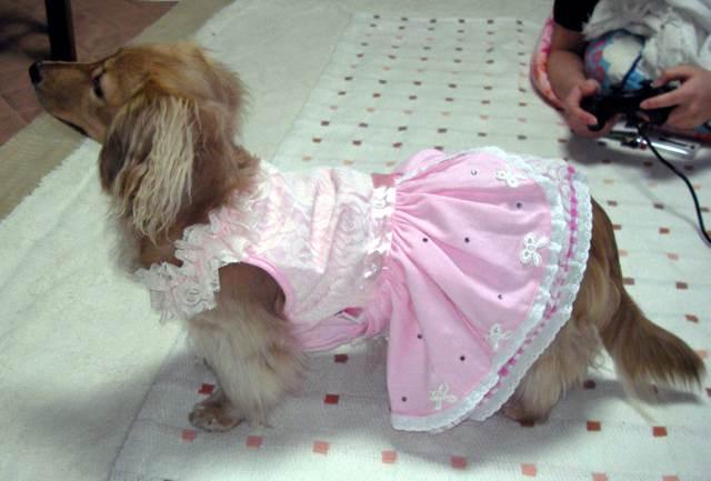 ドレス かわいい
