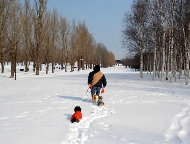 冬の前田森林公園散歩
